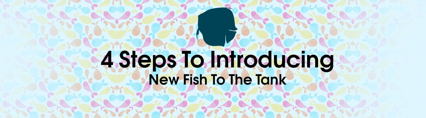 4-steps-to-introducing-new-fish-to-the-tank