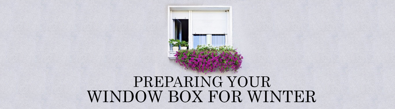 preparing-your-window-box-for-winter