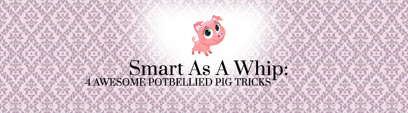 smart-as-a-whip-4-awesome-potbellied-pig-tricks